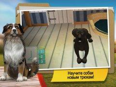 DogHotel Premium - Мой отель для лабрадоров